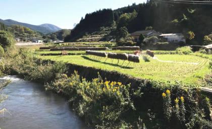 6月開催!「Noya Supporter」農業体験のお知らせ&5月開催イベントレポート